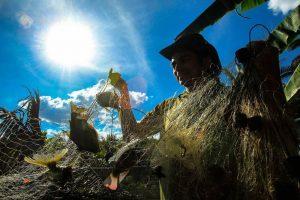 Peixe surge como alternativa de renda para agricultores familiares do sertão